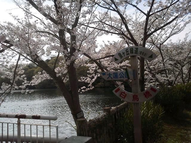大蓮公園2015・春
